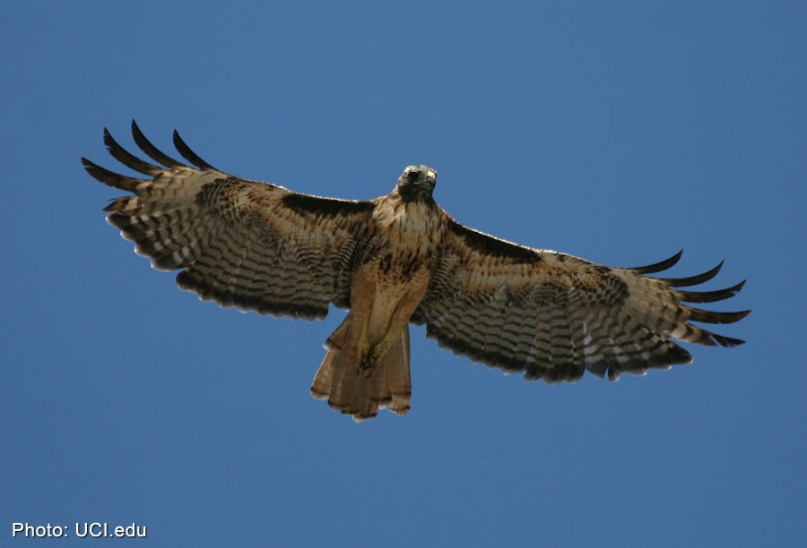 Predatory Birds When we think of a predator