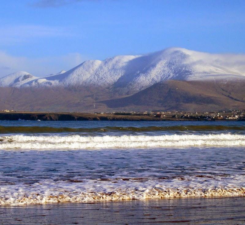 Mccoys Christmas Trees: A (Virtually) Traditional Irish Christmas
