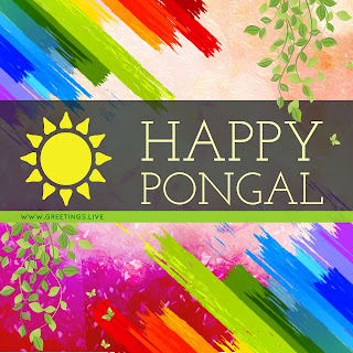 Colourful sun festival Pongal beautiful Greetings image.jpg