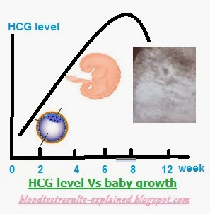 Chart of normal hcg ranges during st trimester in miu ml and iu  week weeks also level levels charts at to rh bloodtestsresults