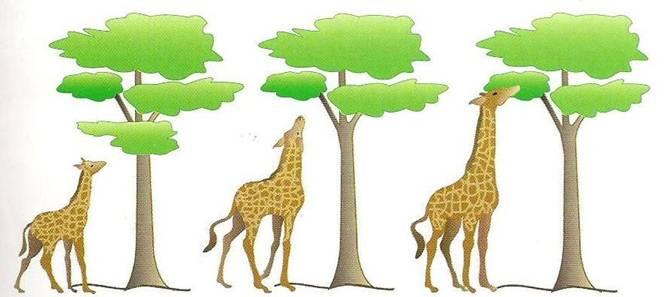 Resultado de imagen de teoria de la evolucion de lamarck