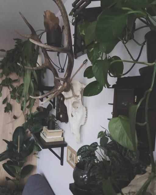Sposoby na tanie powiększanie dżungli