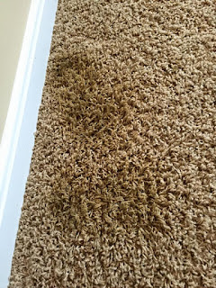 best carpet cleaner for old pet stains
