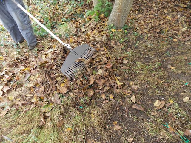 Les feuilles mortes, un trésor pour le jardin