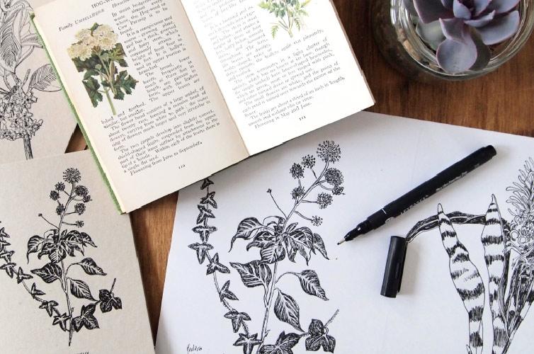 Alfies Studio Botanical Illustration - Alfie's Studio