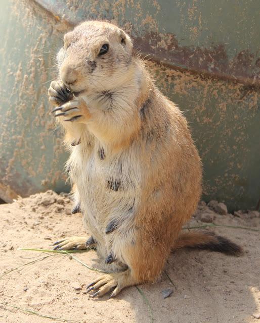 IMG 4022 - Wildlands Adventure Zoo Emmen