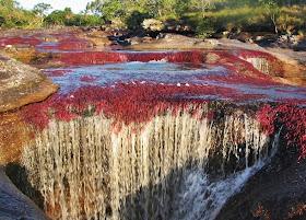 نهر كانو كريستال ذو الألوان الخمسة في كولومبيا