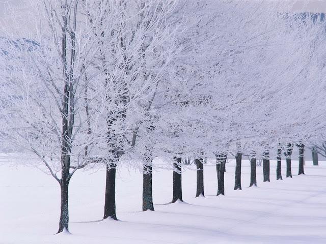 Foto met witte bomen in de winter