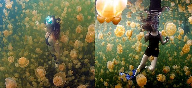 Denizanası Gölü (Jellyfish Lake) Hakkında Bilgi