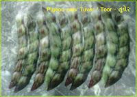 pigeon pea tuver seeds