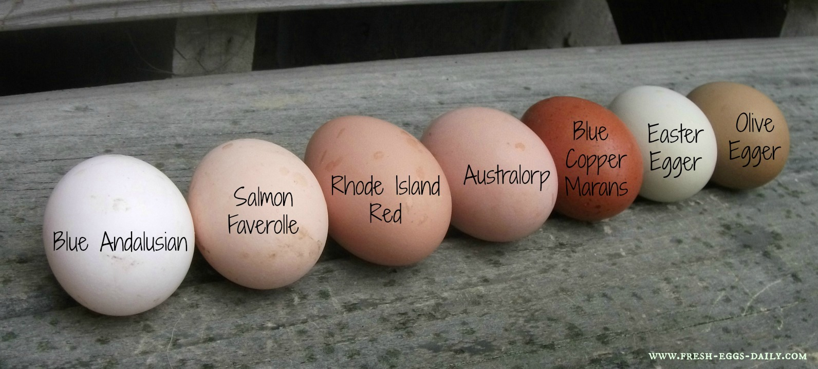 A Rainbow of Egg Colors - What Breed of Chicken Lays Which ...