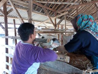 Pastikan  Hewan Kurban Sehat DKP3 Kota Cirebon Lakukan Sidak