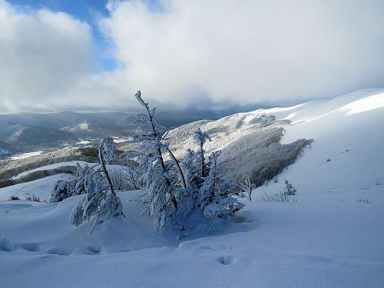 Drzewka pokryte pióropuszami lodu.