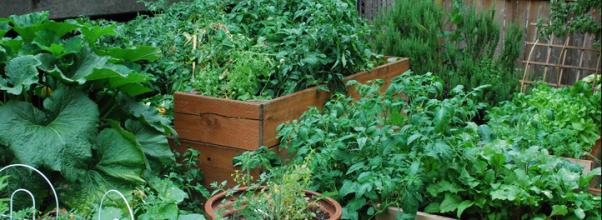 Cara berkebun sayuran organik di pekarangan rumah yang sempit