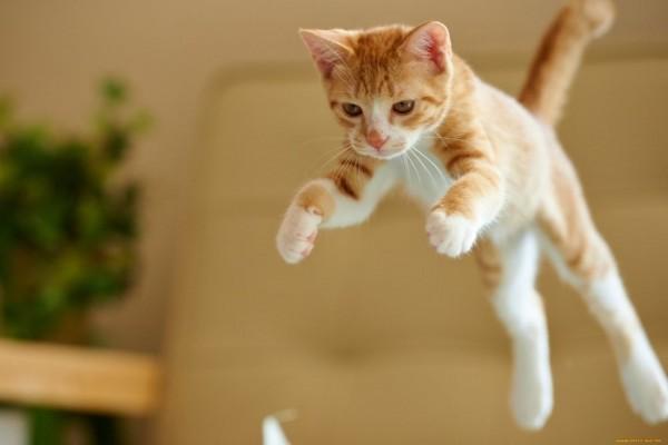 10 Mamalia Paling Berbahaya dan Mematikan di Dunia, Kucing Termasuk!