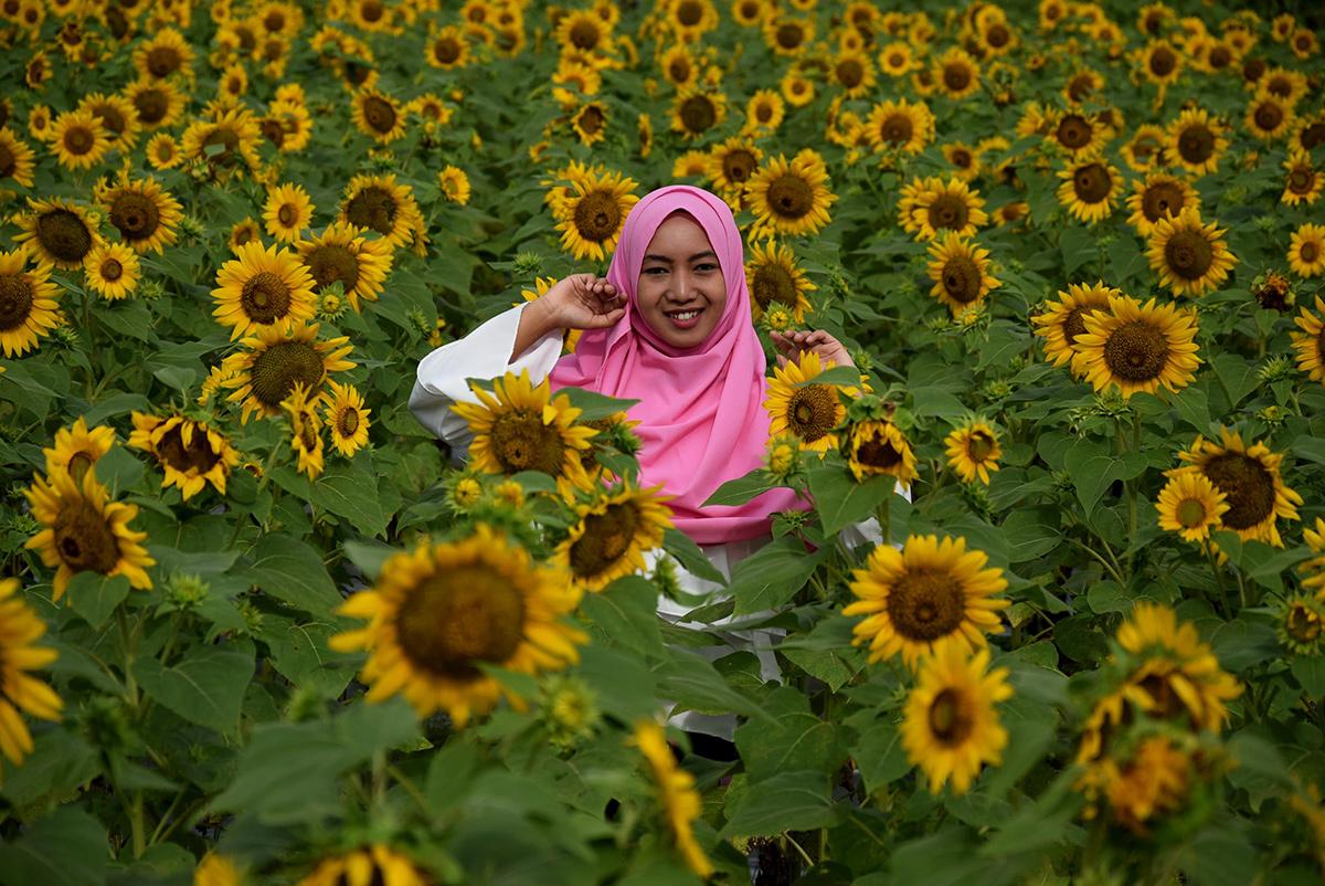 Dwi Susanti Rona Pagi Di Taman Bunga Matahari Dewari