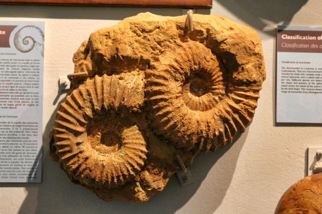 Museo de fosiles en La Vanille