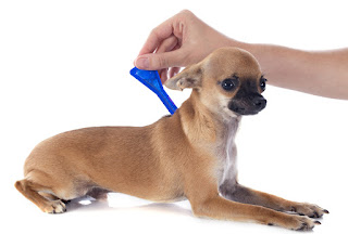 Flea Medication to Treat Fleas And Ticks