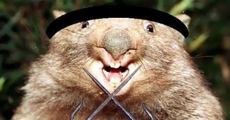 Cute Funny Animalz Funny Wombat 2013 Best Images