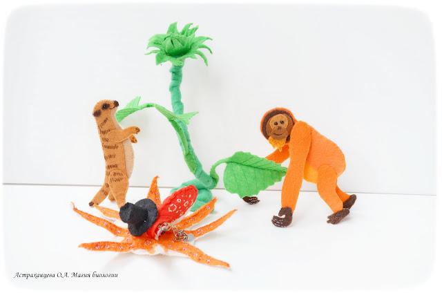 palchikovyj-teatr-orangutan-surikat-osminog-podsolnuh