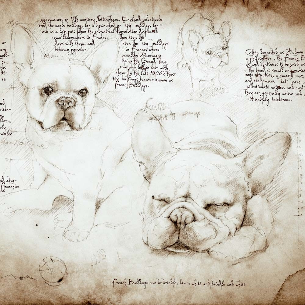 01-French-Bulldog-Study-Leonardo-s-Dogs-Cats-and-Dogs-Drawn-in-the-style-of-Leonardo-da-Vinci