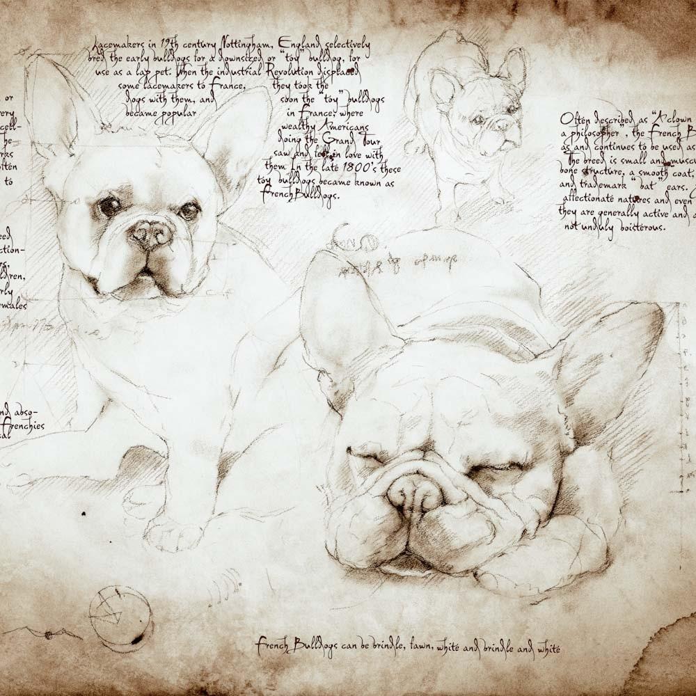 01-French-Bulldog-Study-Leonardo-s-Dogs-Cats-and-Dogs-Drawn-in-the-style-of-Leonardo-da-Vinci