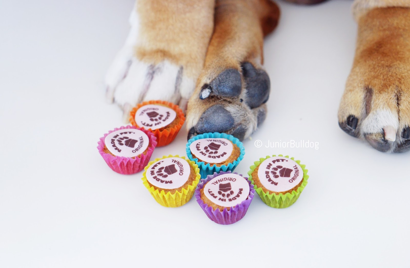 made in pet cupcakes chien madeinpet
