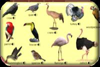 http://www.learningchocolate.com/en-gb/content/birds-2?st_lang=en