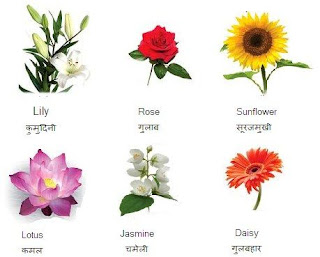 Flower Names in Hindi and English