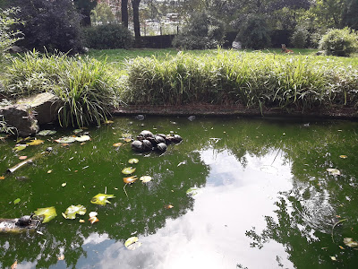 etangs-du-jardin-de-la-roseraie