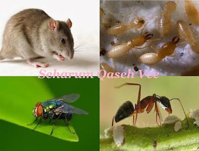 Buat Sendiri Di Rumah : Cara Mudah Halau Serangga
