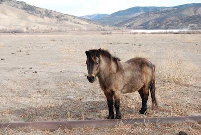 pony drought book