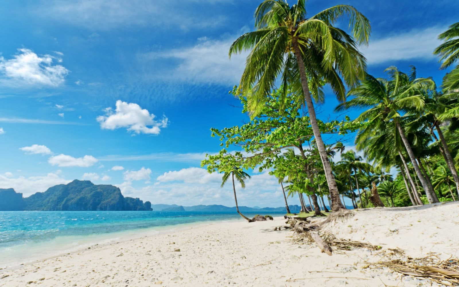 10 Most Popular Beautiful Beach Backgrounds Palm Trees: Studio Backgrounds: Most Beautiful Beaches