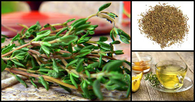 Thyme As An Effective Natural Cough Remedy