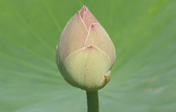 The Closed Lotus