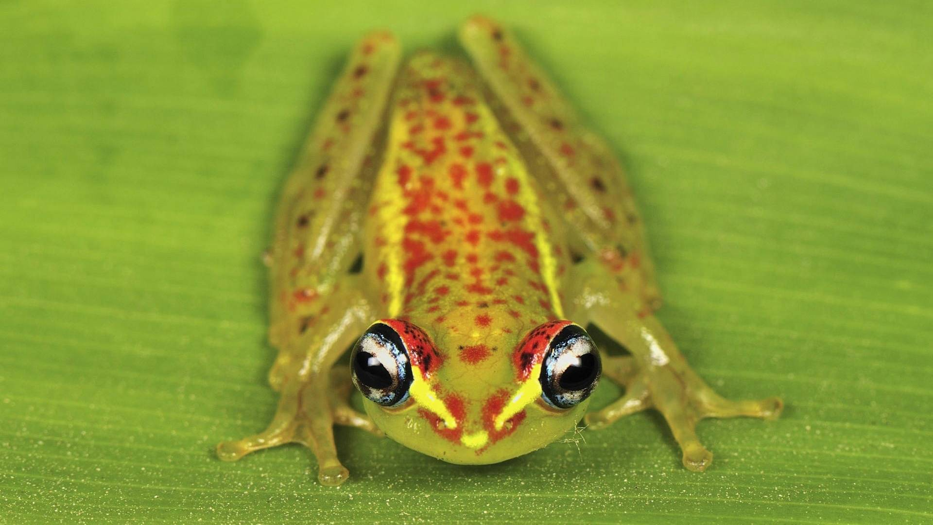 frog hd wallpapers
