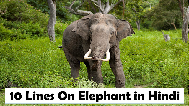 10 Lines On Elephant in Hindi Language