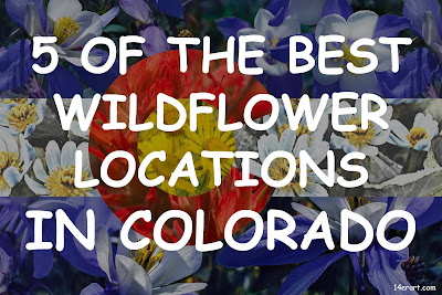 5 of the best wildflower locations in colorado flag
