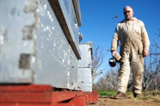Κάλεσμα προς όλους τους μελισσοκόμους απο την ΟΜΣΕ