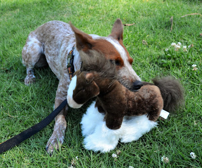 Sturdy stuffed toy for dogs