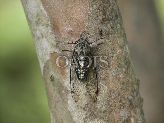 http://www.oadis.jp/oadis/detail/title/29200143