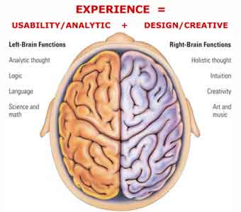 Most of what we know about which half does what we've figured out from  brains that aren't functioning normally. For example if a person's brain is  injured ...