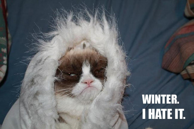 Bad Weather Quotes Funny: Sakura Kiss: What I And Grumpy Cat Have In Common