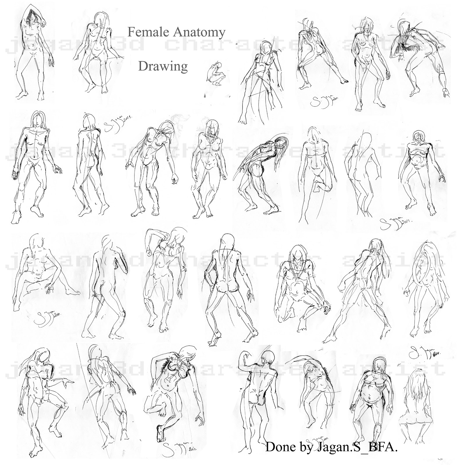 This is a picture of Trust Women Anatomy Drawing