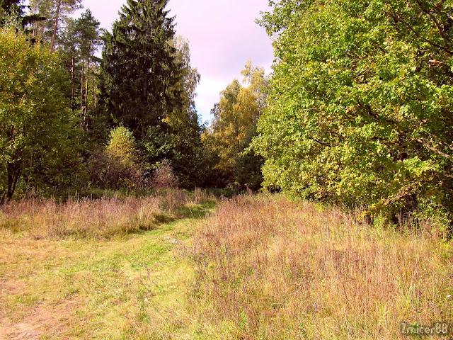 лес Муляроўшчына