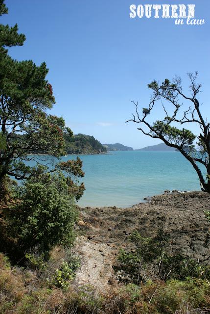The Kauri Bush Walk Coromandel Area New Zealand North Island