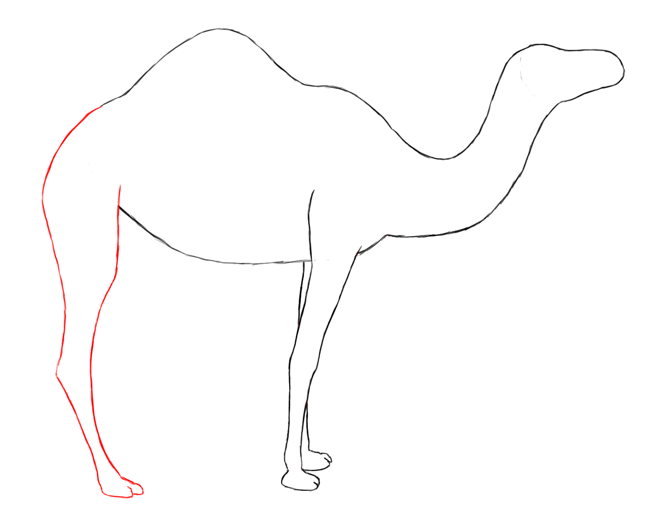 Wallpapers easy camel drawing