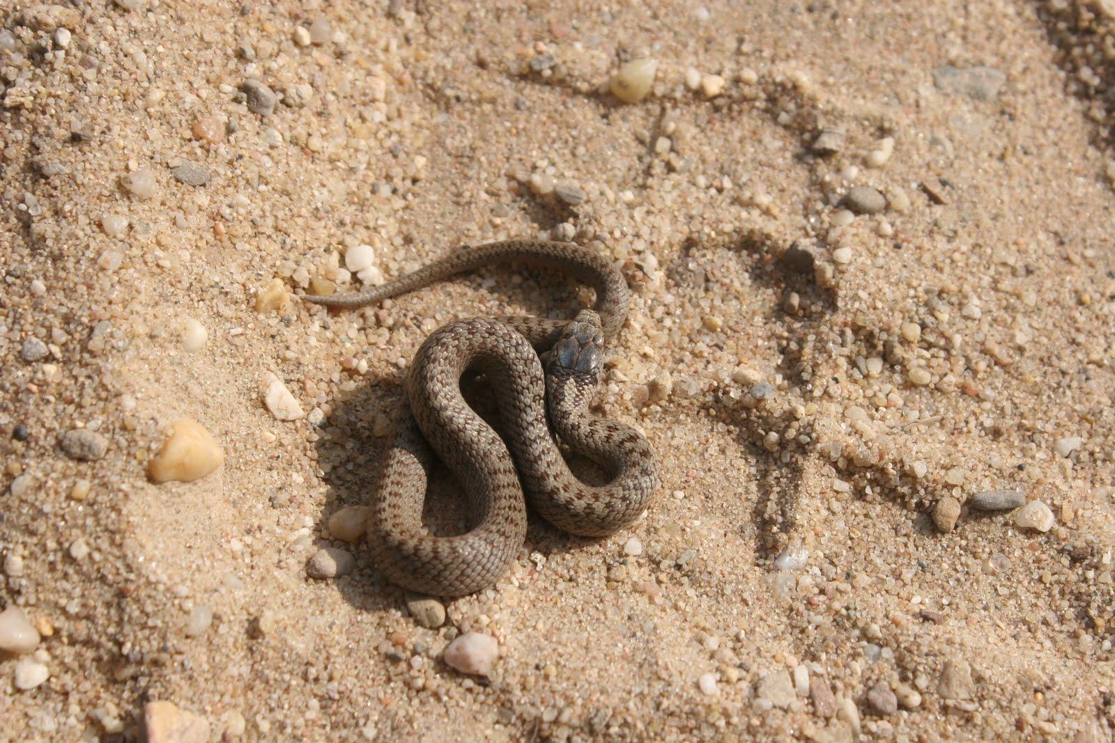 hoe oud worden slangen