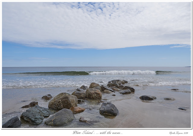 Plum Island: ... with the waves...