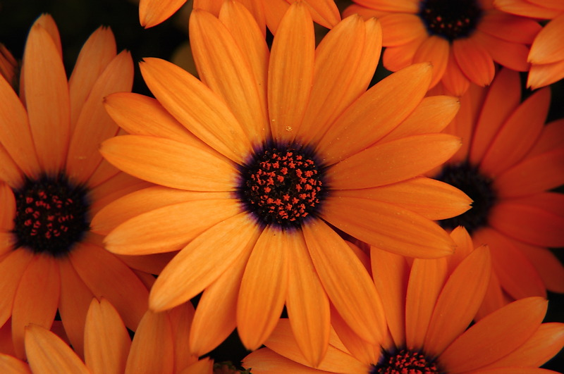 -The NARK news-: FLOWERS BY COLOUR THEORY
